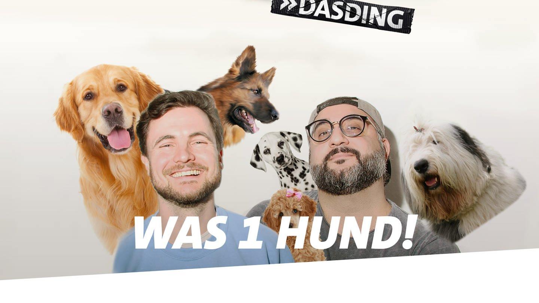 Deep & Dumm Folge 59 (Foto: DASDING)