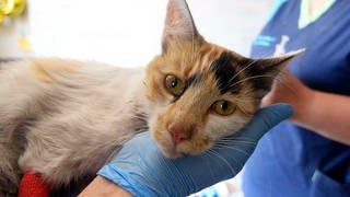 Eine verletzte Katze wird in einem Tierarztzentrum behandelt (Symbolbild). (Foto: dpa Bildfunk, picture alliance/dpa/Agencia Uno   Pablo Ovalle Isasmendi)
